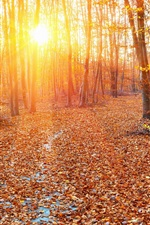 Preview iPhone wallpaper Forest, autumn, sun rays, trees, leaves