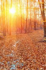 iPhone fondos de pantalla Bosque, otoño, los rayos del sol, árboles, hojas