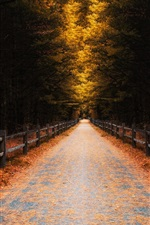Forest, trees, leaves, autumn, road, fence