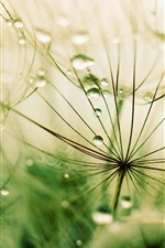 Preview iPhone wallpaper Grass, drops, rain, macro photography