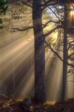 Preview iPhone wallpaper Morning forest, sun rays, trees, rocks