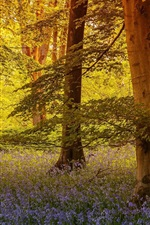 Preview iPhone wallpaper North Yorkshire, England, trees, flowers