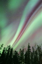 Preview iPhone wallpaper Northern lights, night, forest, trees, stars