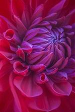Preview iPhone wallpaper Red flower macro, bud, petals