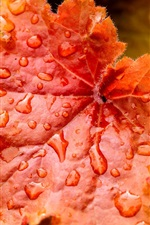 Preview iPhone wallpaper Red leaves close-up, water drops