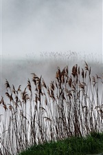 Preview iPhone wallpaper Reeds, lake, fog, duck fly