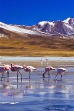 Preview iPhone wallpaper Snow, mountains, lake, birds, flamingos