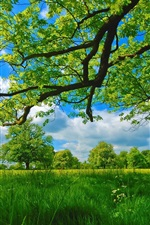 Preview iPhone wallpaper Summer, meadow, trees, grass, green