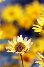 Summer, yellow flowers, blurring