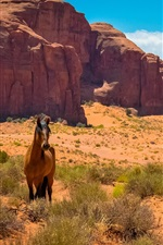 EUA, Arizona, Utah, Monument Valley, cavalo, deserto