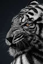 Preview iPhone wallpaper White tiger, black background