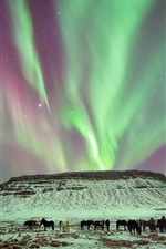 Preview iPhone wallpaper Winter, northern light, horses, dusk