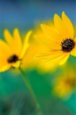 Preview iPhone wallpaper Yellow flowers close-up, focus, bokeh