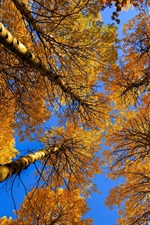 Preview iPhone wallpaper Birch, trees, trunk, yellow leaves, autumn