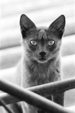 Preview iPhone wallpaper Black cat, railings, stairs