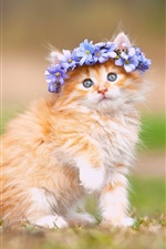 Preview iPhone wallpaper Cute kitten, fluffy, flowers, wreath