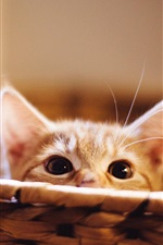 Preview iPhone wallpaper Cute kitten hidden in basket