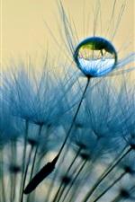 Preview iPhone wallpaper Dandelion close-up, macro, dew, water drop, blue