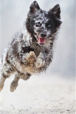 Preview iPhone wallpaper Dog running and jump, bokeh