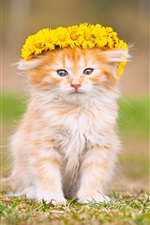 Gatinho macio, flores amarelas, grinalda