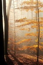 Preview iPhone wallpaper Fog, trees, leaves, sun rays, autumn