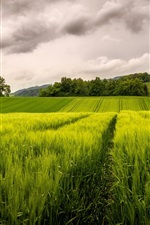 Green fields, sky, clouds, trees, hills