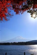 Japão, Monte Fuji, estrada, rio, galhos, folhas vermelhas, sol