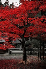 Preview iPhone wallpaper Japan, house, tree, red leaves, autumn