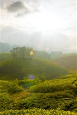 Preview iPhone wallpaper Morning, green fields, sunrise, trees, clouds