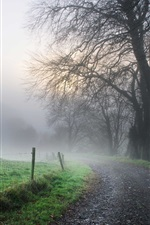 Preview iPhone wallpaper Morning, road, fog, trees