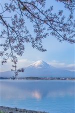 Preview iPhone wallpaper Mount Fuji, Lake Kawaguchi, Japan, twigs, flowers