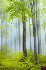 Preview iPhone wallpaper Nature scenery, forest, trees, morning, fog, after rain