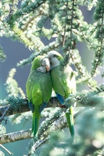 Preview iPhone wallpaper One pair parrots, green birds, tree