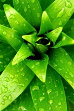 Preview iPhone wallpaper Plant close-up, green leaf, water drops