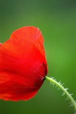 iPhone fondos de pantalla Flor de amapola roja, pétalos