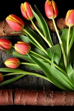Red yellow petals, tulips, bark, black background