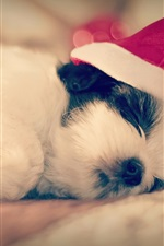 Preview iPhone wallpaper Shih Tzu, dog sleep, Christmas