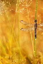 Preview iPhone wallpaper Summer, grass, dew, glare, dragonfly