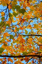 Tree, branches, yellow leaves, autumn