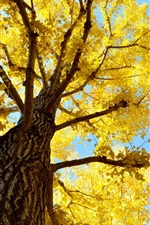 Preview iPhone wallpaper Tree, trunk, sky, yellow leaves, autumn
