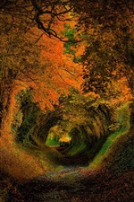 Preview iPhone wallpaper Trees, hole, nature, forest, road, autumn, colors, leaves