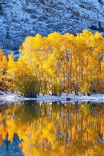 Trees, yellow leaves, lake, snow, winter, water reflection