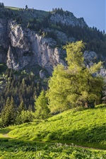 Valais, Switzerland, Alps, mountains, trees, grass, house