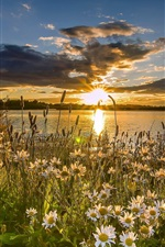 Preview iPhone wallpaper West Yorkshire, England, lake, daisies, sunset