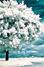 Preview iPhone wallpaper White flowers blossom, clouds, trees