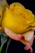 Preview iPhone wallpaper Yellow rose, black background