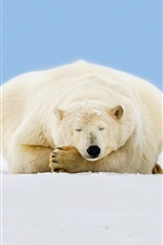 Preview iPhone wallpaper Alaska, polar bear sleep, ice, snow