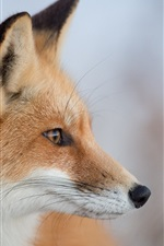 Preview iPhone wallpaper Animal close-up, fox, head, face, bokeh