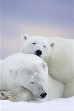 Preview iPhone wallpaper Arctic National Wildlife Refuge, Alaska, polar bears family, fall sleep