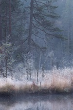 Preview iPhone wallpaper Autumn, forest, river, fog, dusk